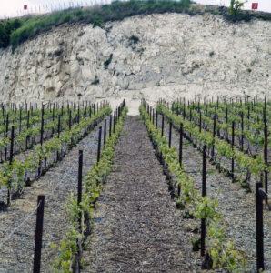 craie et rangs de vignes